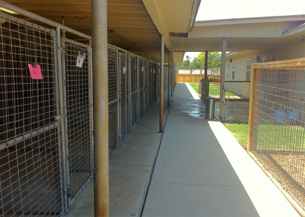 outside kennel side 2